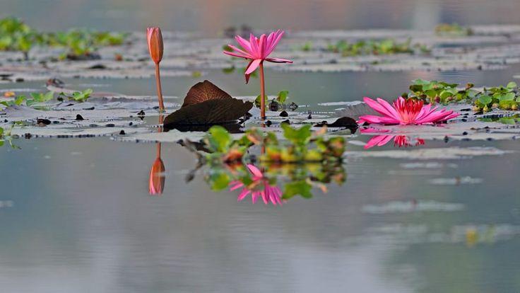 Reflection by Kalyan Sen on 500px
