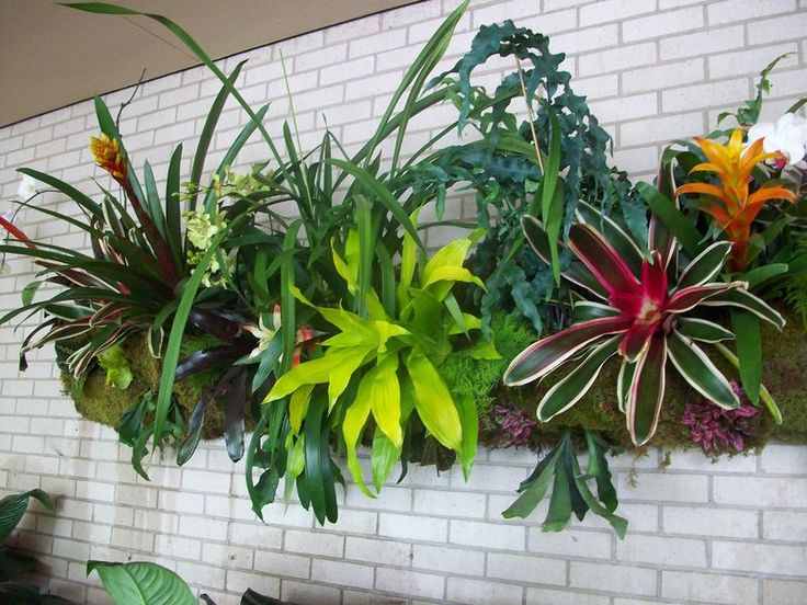 Inspiring way to display epiphytic plants such as orchids and bromeliads.