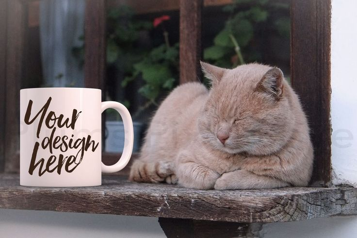 Mug Mockup, Styled Stock Mug Image, Mockup Styled Coffee Mug, cat, Product Photography, Mug design, Digital, white mug, pet mug, by plumspixellove on Etsy