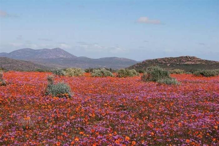 From desert in summer to flowers in spring, Namaqualand, Namibia