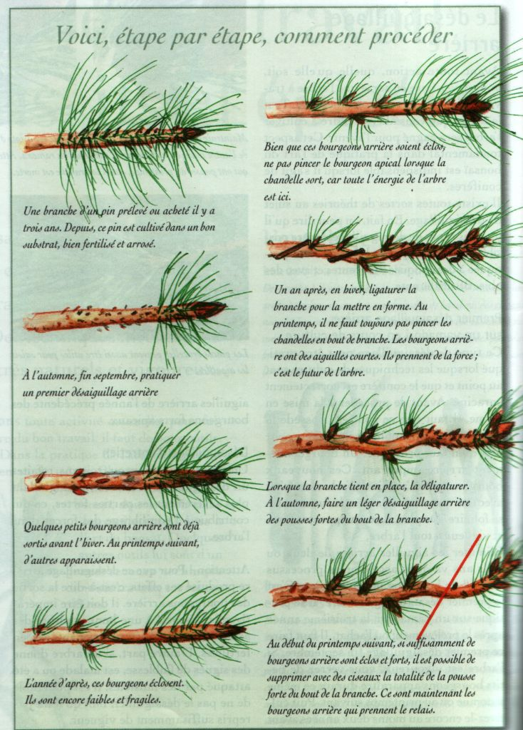 Bonsai Ideas More Pins Like This At FOSTERGINGER @ Pinterest