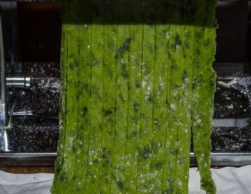 Für die Bärlauchnudeln den Bärlauch waschen, klein schneiden und zusammen mit dem Olivenöl fein passieren. Das Mehl, Salz, die Eier zusammen mit