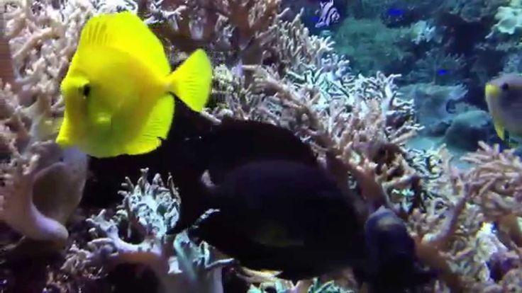 Морской аквариум музыка релакс Коралловый риф. Поймай рыбу руками
