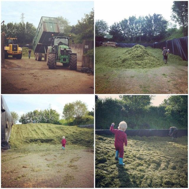First Silage Cut 2014 #farm #silage #somerset #dairy