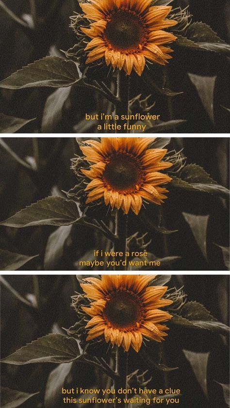 Image about love in Films | Sunflower quotes, Wallpaper ...
