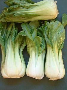 Oderings Garden Centre | Vegetable - Pak Choi, Seedlings