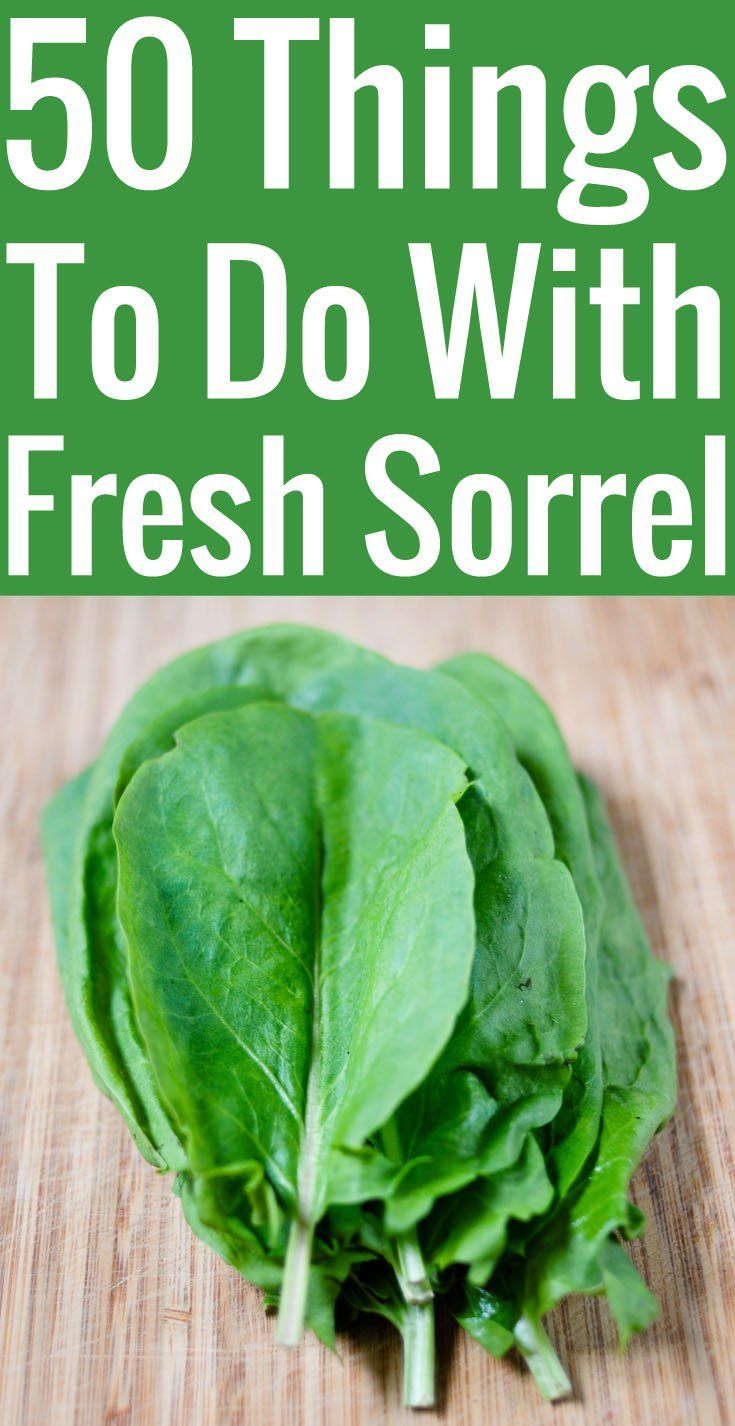 Got an overflow of sorrel in your garden and not sure what to do with it? Here are 50 inspired sorrel recipes, ideas, and tips.