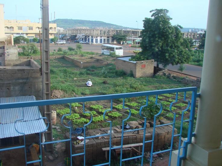 Urban garden. View from hotel window, Bamako. Farmer to Farmer Program, Dladie, Mali, W. Africa.