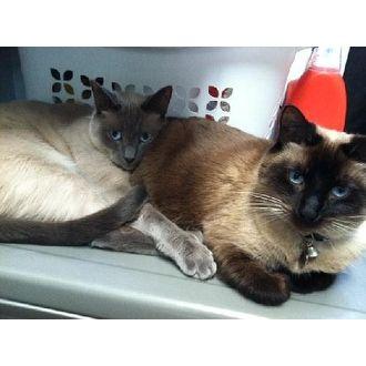 Suki | Precious Rescue of Palm Beach | Jupiter, Florida | Pets.Overstock.com
