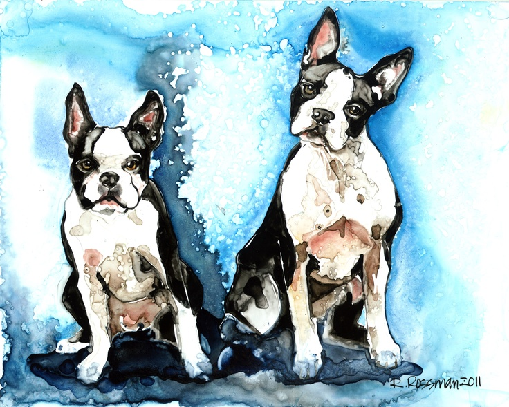 Boston Terrier portrait by Rachael Rossman