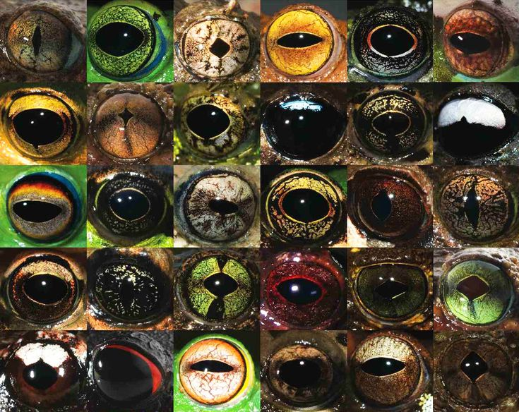 Misty Mountains and Moss Frogs: Stunning Photos of Frog Eyes