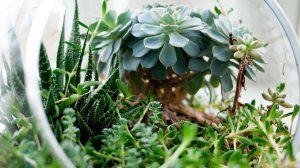 Комнатные растения - скачать обои на рабочий стол