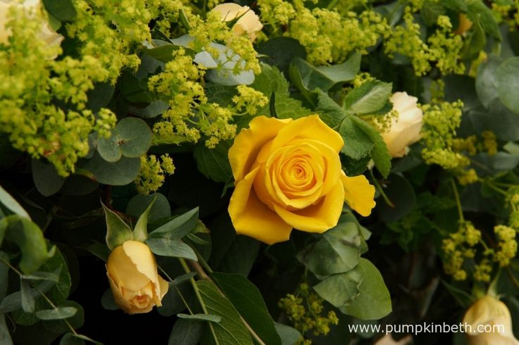 A beautiful floral arrangement with the Rose Of The Year 2016, Rosa 'Sunny Sky' (Koraruli) and Alchemilla mollis.  Rosa 'Sunny Sky' was bred by W. Kordes' Söhne of Germany and has been introduced to the UK by Roses UK and Mattocks Roses.
