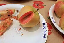 Pink Pearl (5207256521).jpg