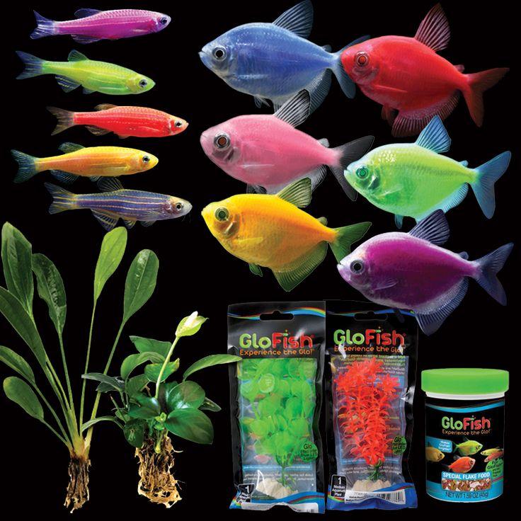 32 best buy glofish online images on pinterest fish for Order aquarium fish online