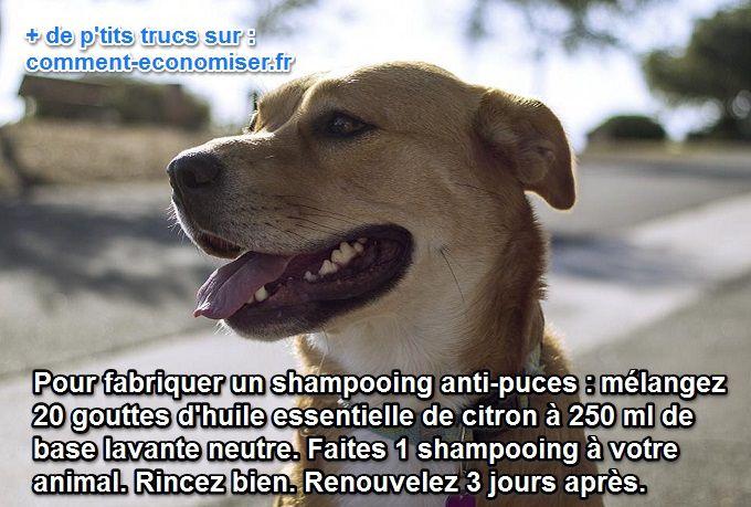 Les puces attaquent les chats et les chiens. Et pour nos amis à 4 pattes, nous cherchons des remèdes naturels contre les puces.  Découvrez l'astuce ici : http://www.comment-economiser.fr/huile-essentielle-citron-puces.html?utm_content=buffer3a79a&utm_medium=social&utm_source=pinterest.com&utm_campaign=buffer