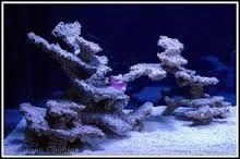 Resultado de imagen de special reef scaping