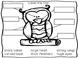 Owls Kindergarten on Best Owls Kindergarten Ideas On Pinterest Owl Activities Nocturnal