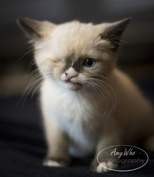 Sir Stuffington, the one eyed cat