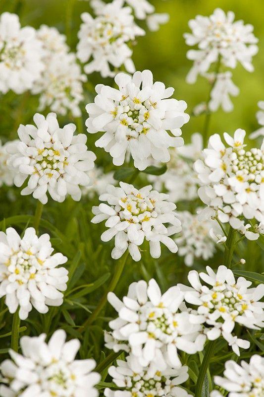 Corbeille D Argent Fleurs Pinterest
