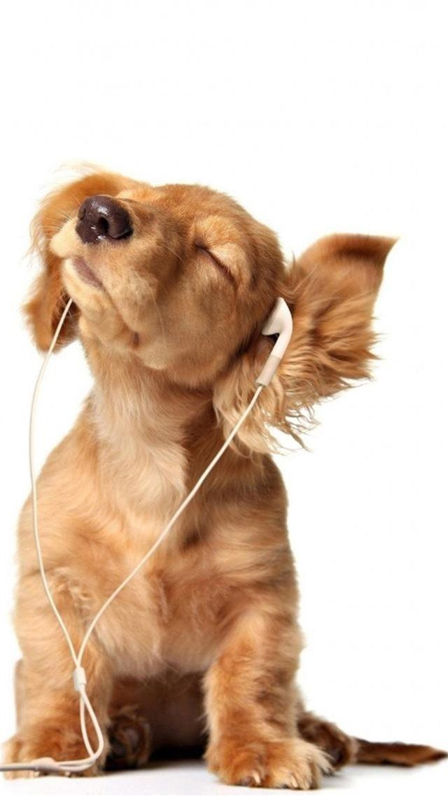 Intoxicated Listen To Music Cute Puppy Iphone 8 Wallpaper