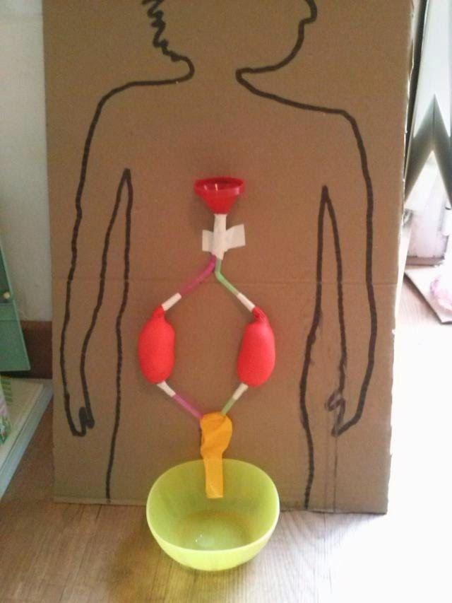 Sistema excretor para  proyecto el cuerpo humano, es una actividad muy visual y manipulativa, perfecta para los mas pequeños