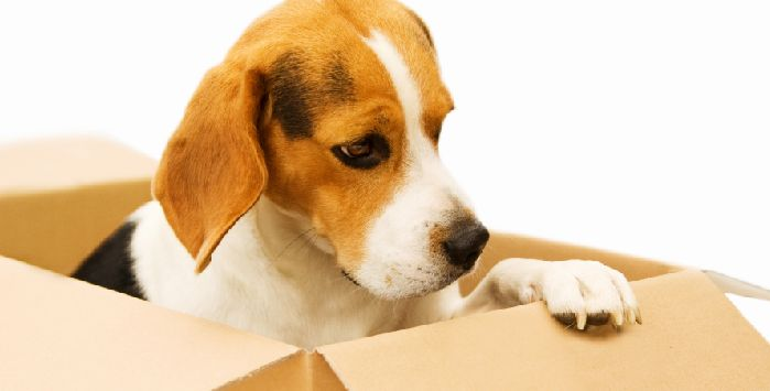 REVISITING THE SUBJECT OF PETS AND REMOVALS #homeremoval #relocation