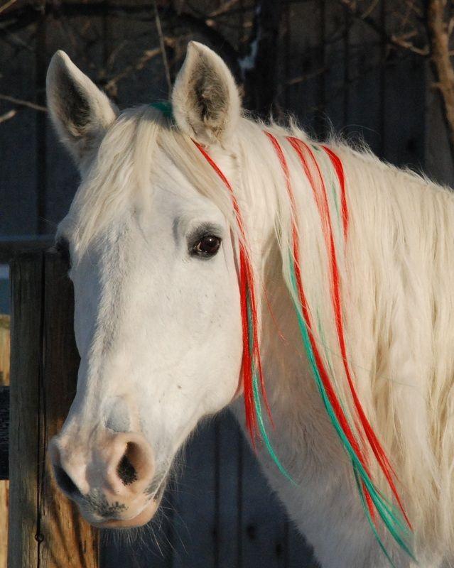 horse hair color