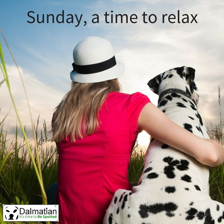 Sunday, a time to relax. Sunday positivity. Weekend quotes. Dalmatian.