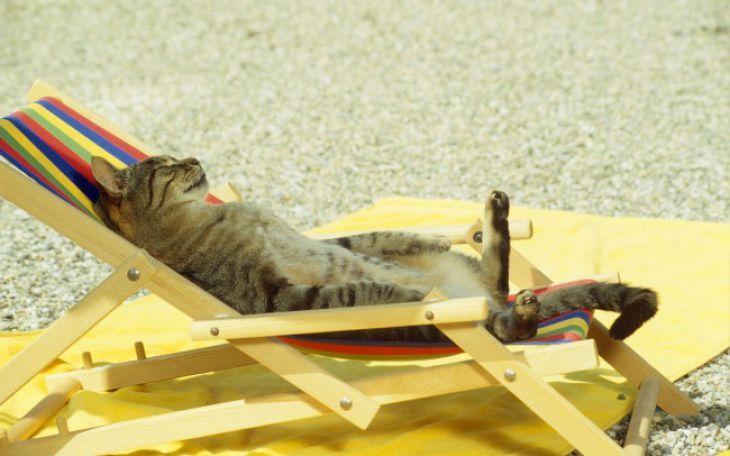 Los gatos no sólo son conocidos por tener muy mal carácter, también por su habilidad para relajarse…y queremos decir relajarse por completo.