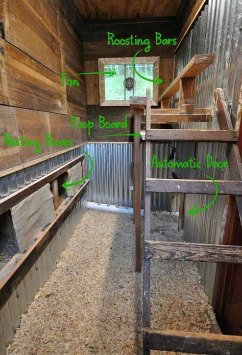A custom chicken coop with nesting boxes, an automatic coop door, a poop board, and comfortable roosts