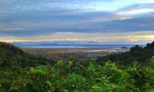 """Landscape of Danau Sentarum National Park, Kalimantan, Indonesia.. photo taken from """"tanjakan lanjak"""""""