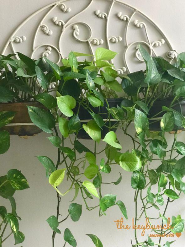 19 Best Geeta Singh S Garden Centric Chandigarh Home