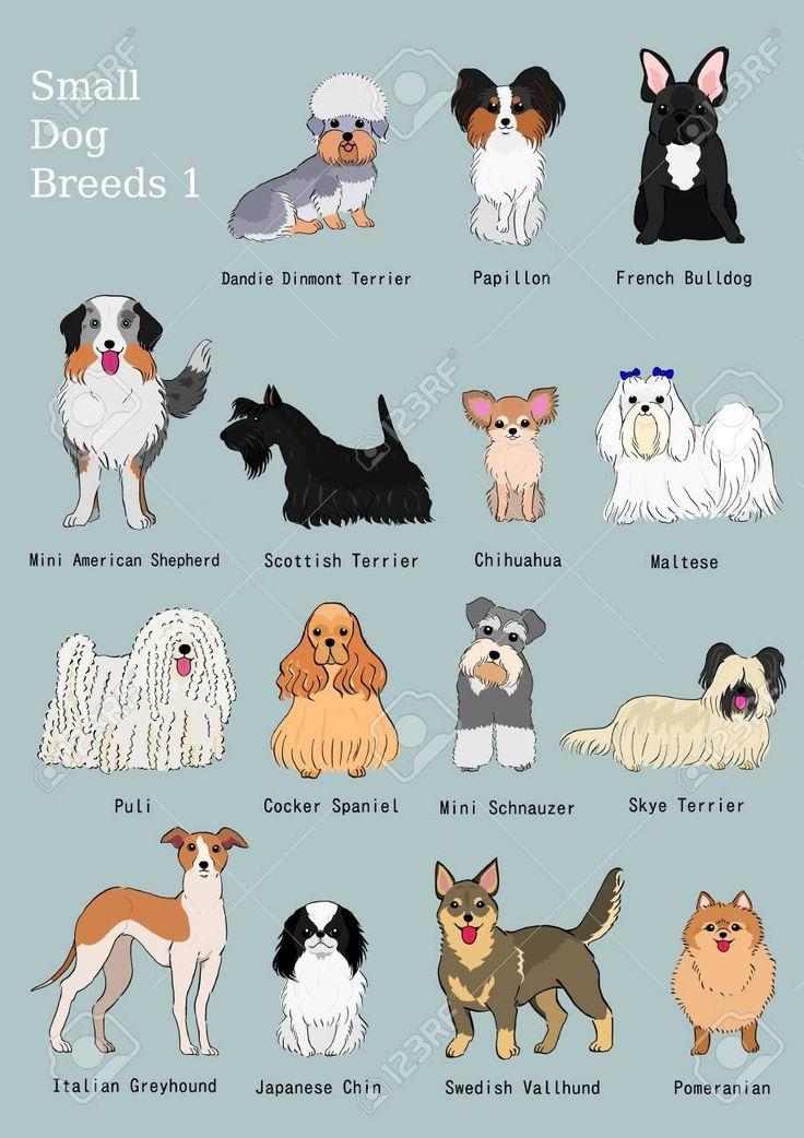Dog Breeds Chart Breeds Chart Hunderassediagramm Tableau Des