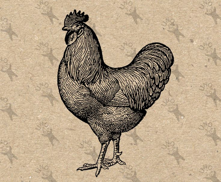 Antique image Cockerel Rooster Instant Download Digital printable vintage picture clipart graphic prints burlap decor t-shirt etc HQ 300dpi by UnoPrint on Etsy
