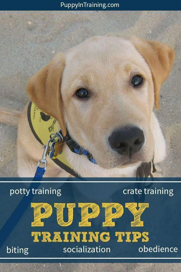 Broad Minded Supervised Dog Training How To Buy Now Pay Later