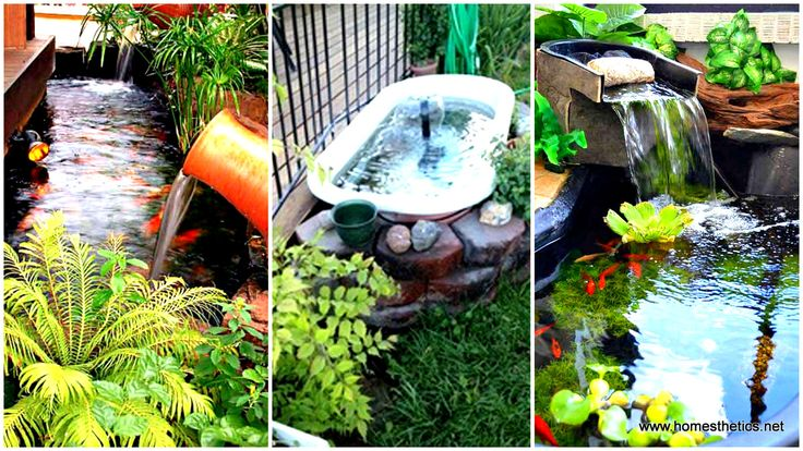 Along small ponds swimming pools water fountains for Aquarium fish outdoor pond