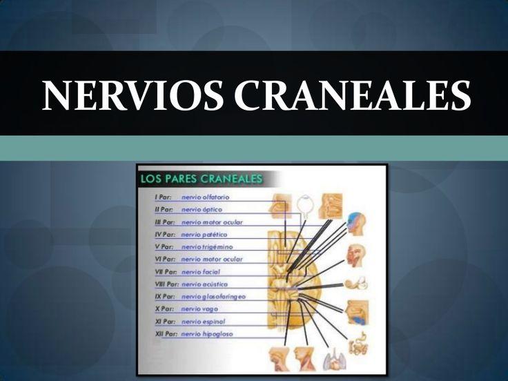 Funciones de los 12 Nervios Craneales by Yngri Rojas Olivera via slideshare