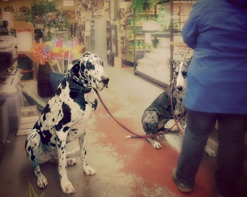 Meet Otis and Stella! I want them as my future dogs♥