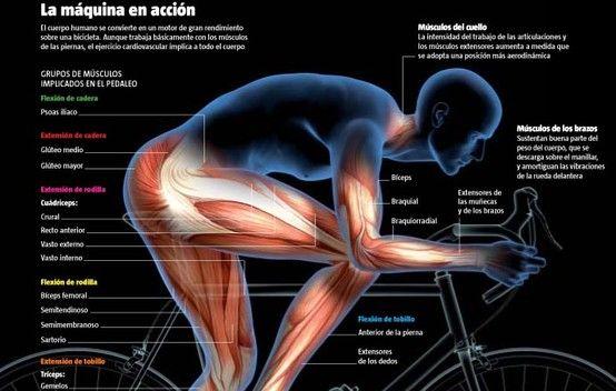 Que musculos trabajamos en la bicicleta Nos inspira!! #triatlon  #triathlon