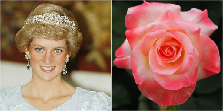 10 Gorgeous Flowers Named After the Royal Family - GoodHousekeeping.com