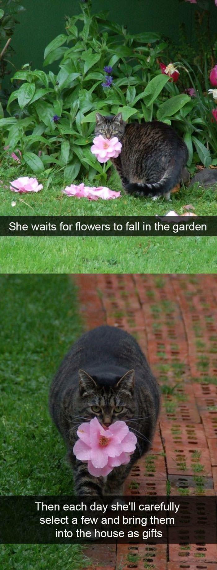 Cute chubby cat – cute – #Cat #chubby #cute