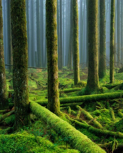 Forest in Golden Ears Provincial Park, British Columbia, Canada | Adam Gibbs. Most trees are now close to 100 years old. Stumps from earlier giants can be found throughout the area.