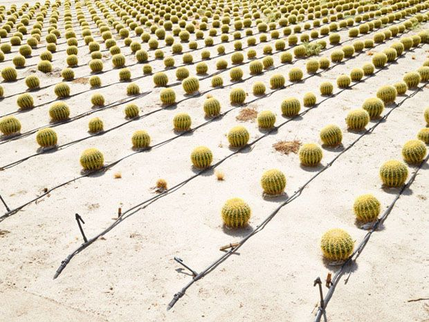 The Bizarre World of Modern-Day Agriculture Photographed by Henrik Spohler - Feature Shoot