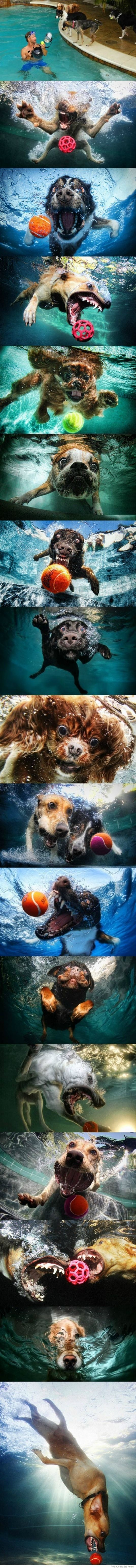 dogs-underwater   omg so awesome