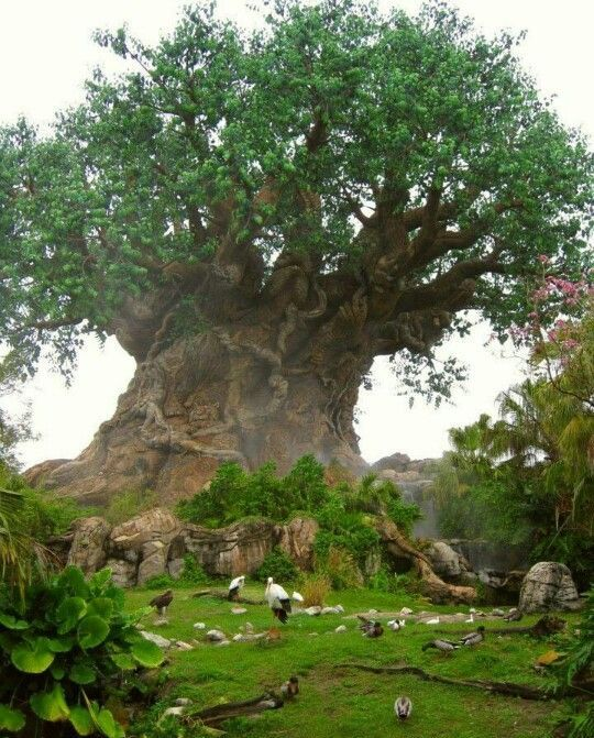 Baobab,Tree of Life. . this simple fact that THIS is REAL absolutely blows my mind.