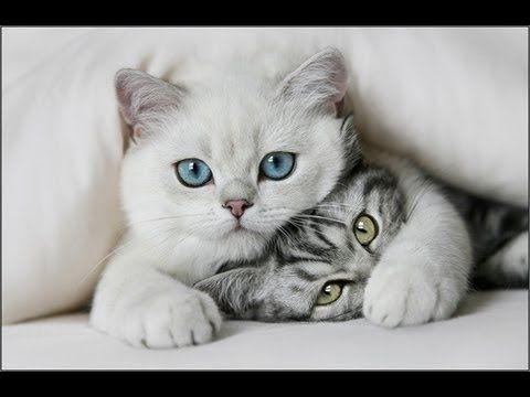 Funny Cat & Cute Kittens Fail Videos - The Best Funny Kitty Cat Video № 10 | Morsomme Katter № 10 - http://positivelifemagazine.com/funny-cat-cute-kittens-fail-videos-the-best-funny-kitty-cat-video-%e2%84%96-10-morsomme-katter-%e2%84%96-10/ http://img.youtube.com/vi/CdDkTyQlerM/0.jpg                                             Subscribe to channel : https://www.youtube.com/channel/UCnDkX48JBPury_qDGXyFCmw.    source                                   Please follo