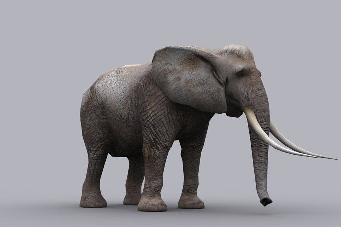 ELEPHANT fbx only by PROTOFACTOR  on @creativemarket