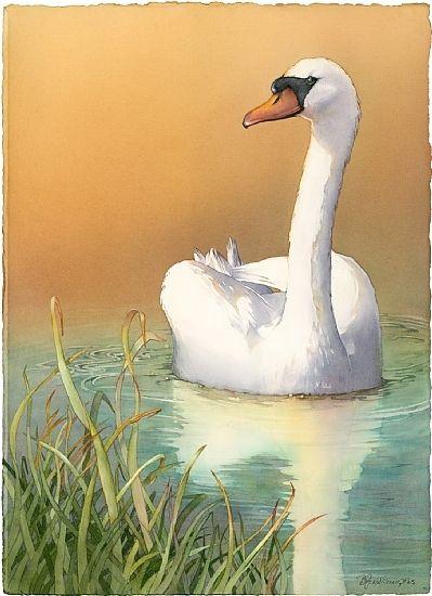 """Reflecting"" (Mute Swan) by Barbara Groenteman Watercolor ~  x"