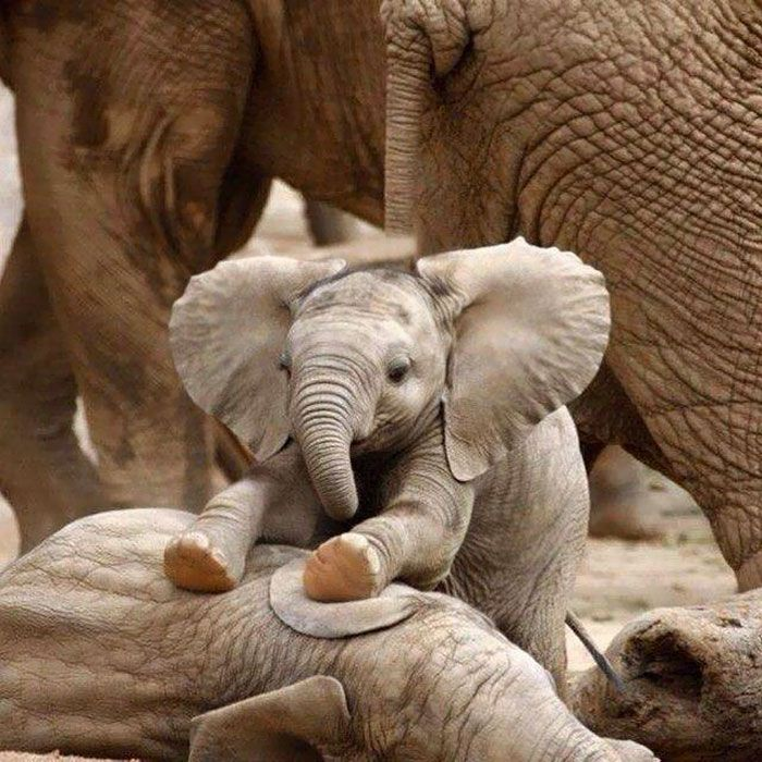 76 Baby Elephants That Will Instantly Make You Smile